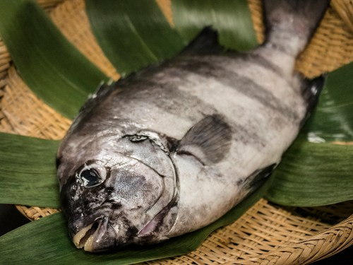 ISHIDAI – Striped beakfish