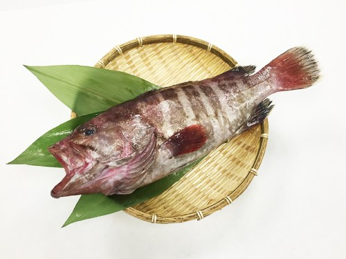 MAHATA – Grouper