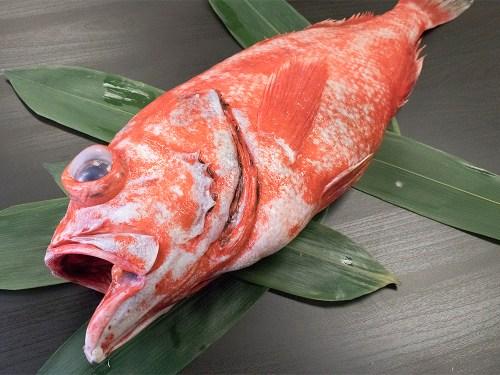 MENUKE – Rockfish