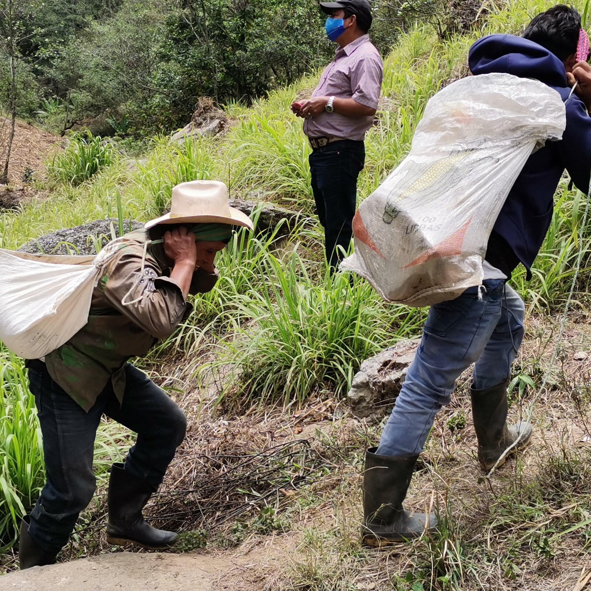 The crews carries supplies up the mountain.