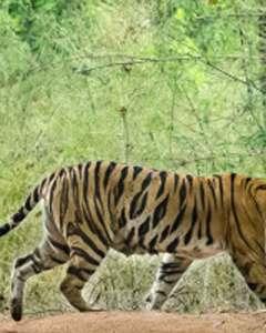 Beautiful kanha Tiger Reserve