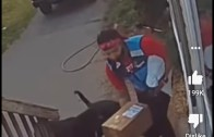 Brave Amazon delivery driver