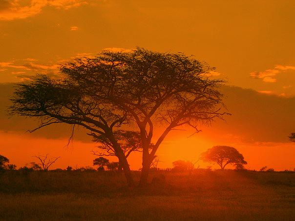 Sunrise Matobo National Park. Photo by Macvivo.