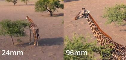 DJI mavic 2 Zoom - Giraffe