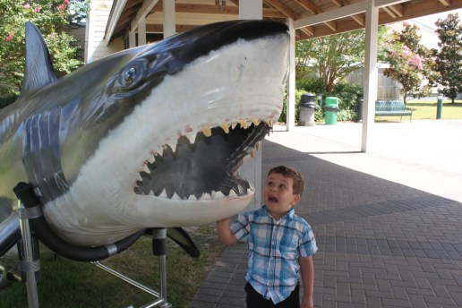 "From member Julianne F.: ""North Carolina Aquarium on Roanoke Island gave our little ham a chance to be goofy with this shark."""