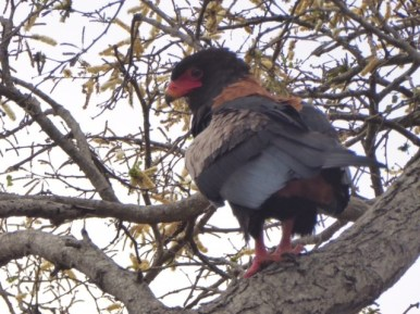 One of the beautiful birds we saw in Kruger Park.