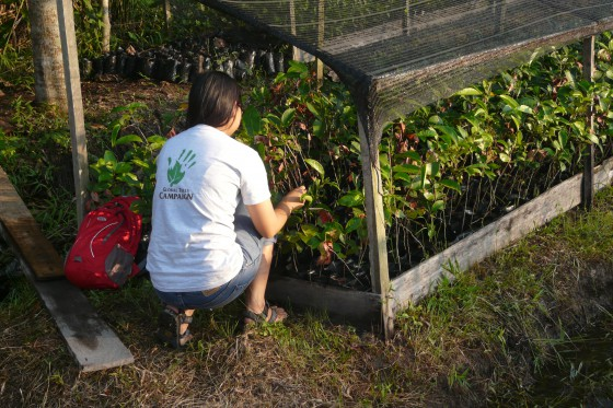 FFI is helping communities grow and plant threatened trees in West Kalimantan.