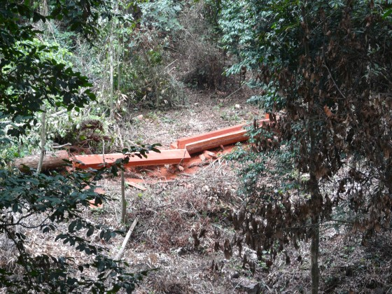 Timber illegally harvested from a reserve in Cameroon. Credit: David Gill/FFI.