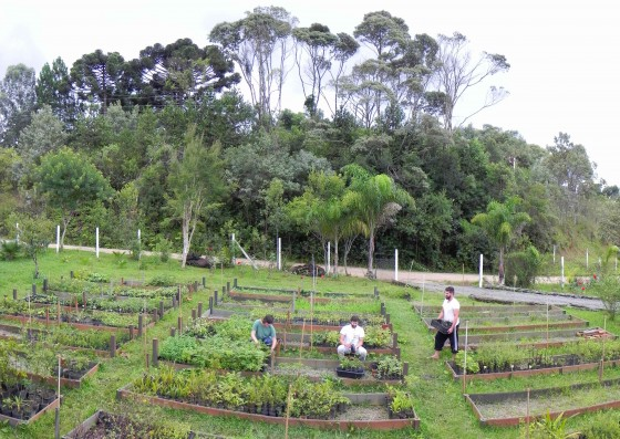 The Chauá team hard at work at the threatened tree nursery. Credit: Marian Lechner