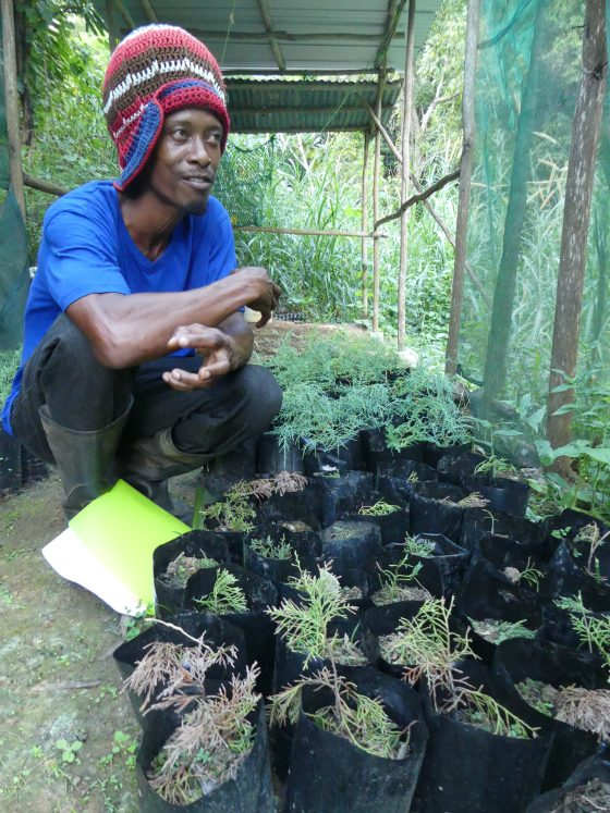 Melvin Smith with the first pencil cedars growing in his nursery. Credit: Jenny Daltry/FFI