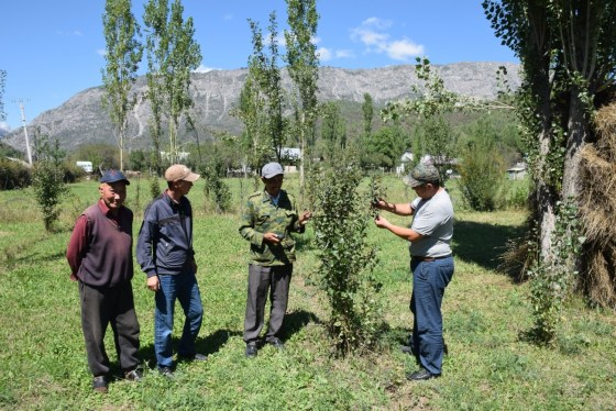Monitoring Malus niedzwedskyana trees over a decade after planting. Credit: FFI