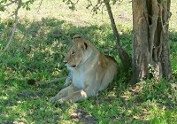 African Lions Fund one step closer to fruition