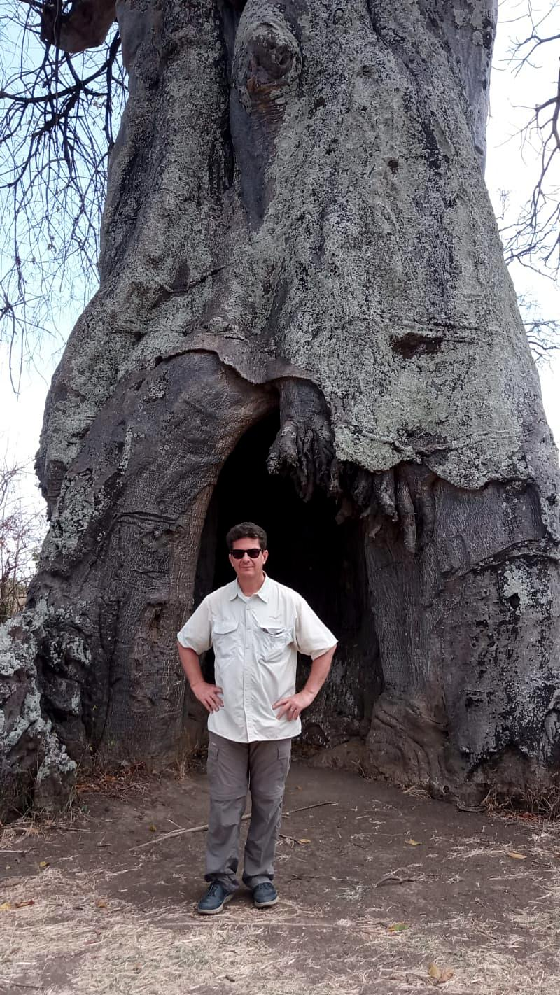 "Tim in front of a Baobab tree previously known as the ""Poachers Hide,"" now fully occupied by bats"