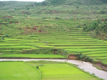 Madagascar rice fields. Image by Flickr user Luc Legay (CC BY-SA 2.0).