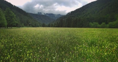 Wildflower meadow in Lower Austria.