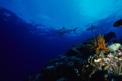 New Study Finds Accelerated Ocean Acidification at 10 Times the Expected Rate