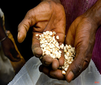 Big Benefits to Rural Poor from Small-Scale Bioenergy Projects