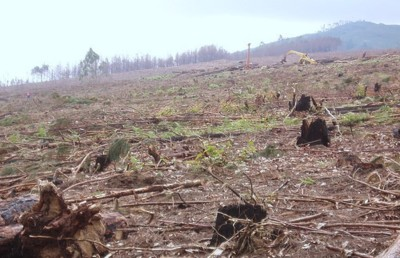 UN Climate Change-Deforestation Policy Co-Opted by Industrial Loggers/Tree Farmers