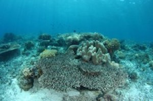 A coral reef turned white by bleaching, a stress reaction to high ocean temperatures