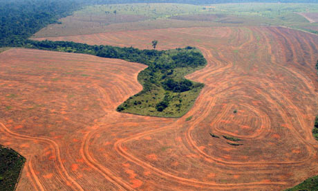 Dam Projects, Land Speculation Threaten Rise in Amazon Rainforest Loss