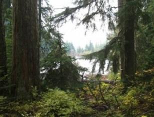 Program highlights forest conservation
