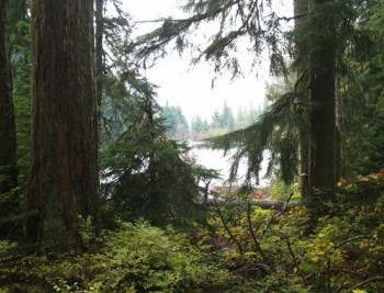 1993 US Northwest Forest Plan Turns Public Forests into Carbon Sink