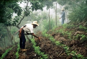 Bigger Picture Landscape Approach to Forest-Agriculture Management Gains Credibility