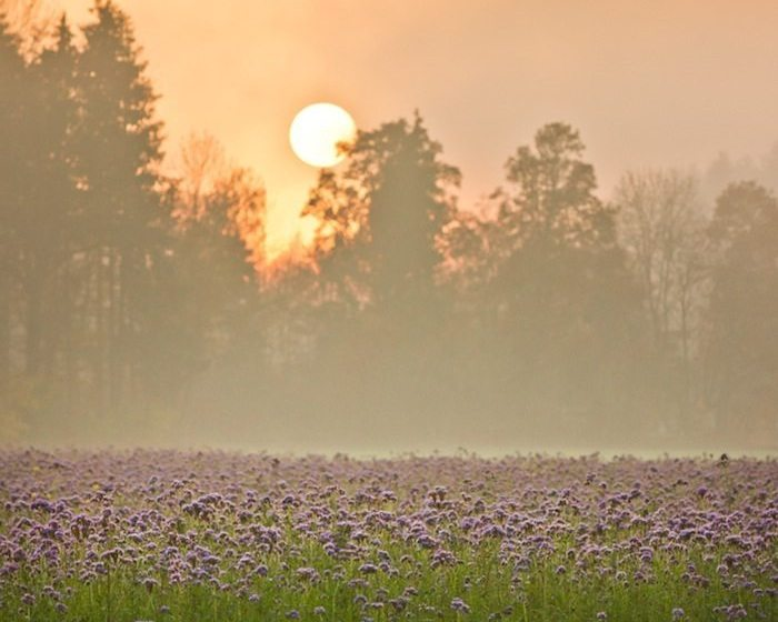 Environmental Gratitude and Ecological Action