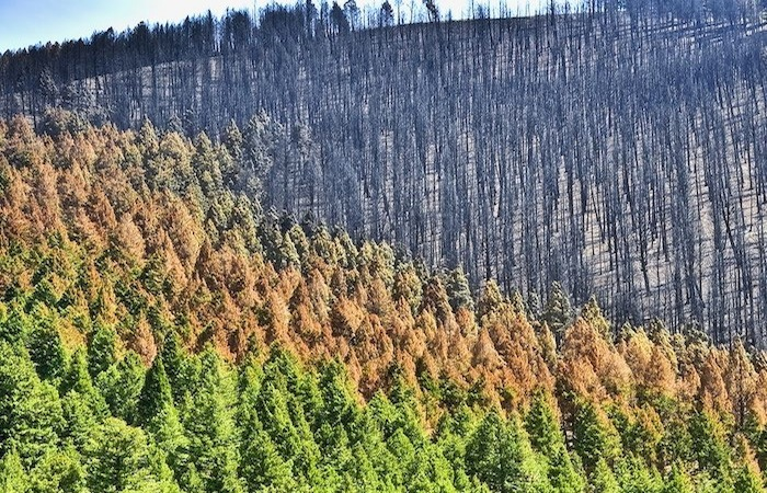 USDA Reports on Climate Change Effects, Adaptation for Agriculture, Forests