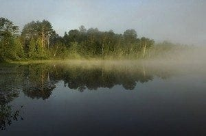 Water is the key to biological diversity