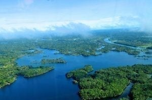 Forests provide ecosystem services vital to all life