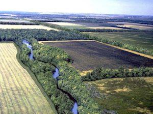 Biological Corridors within farmland