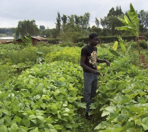 Organic, permaculture agriculture