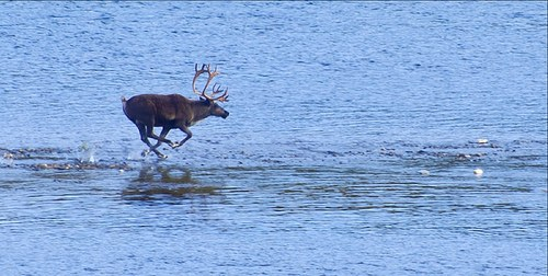 Video Friday: Climate Change Impacts on the Alaskan Ecosystem
