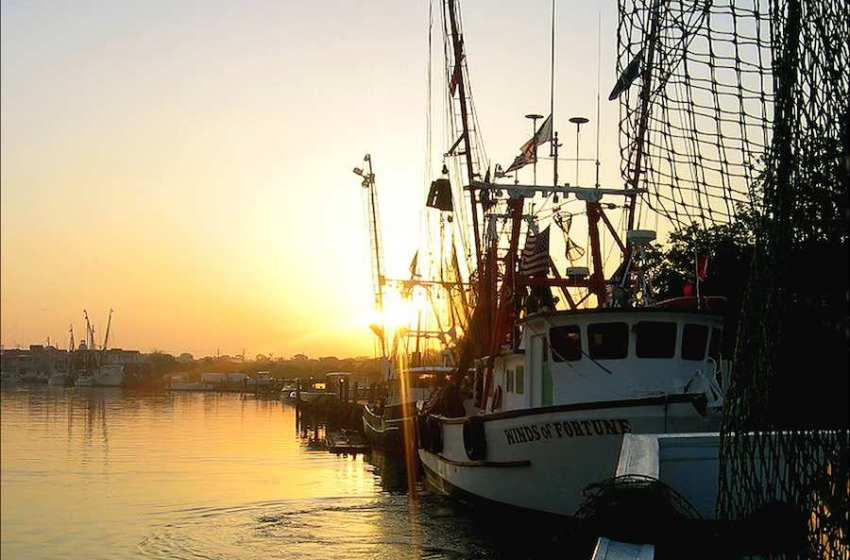 Shrimp Fishery Collapse in Gulf of Maine