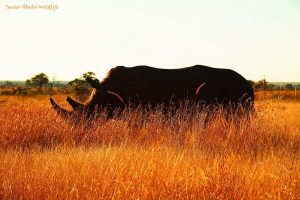 The perils of commoditizing nature is evident in the plight of the Rhino