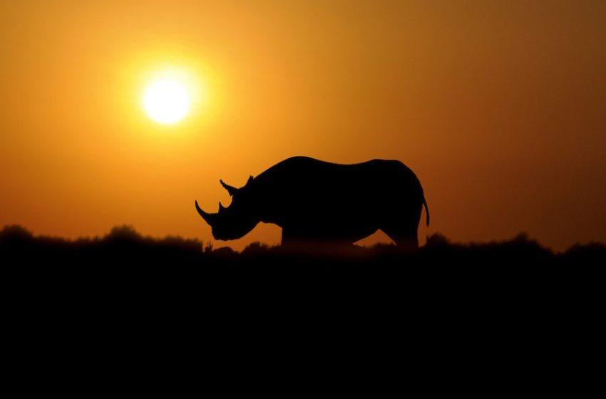People Powered Mass Extinction