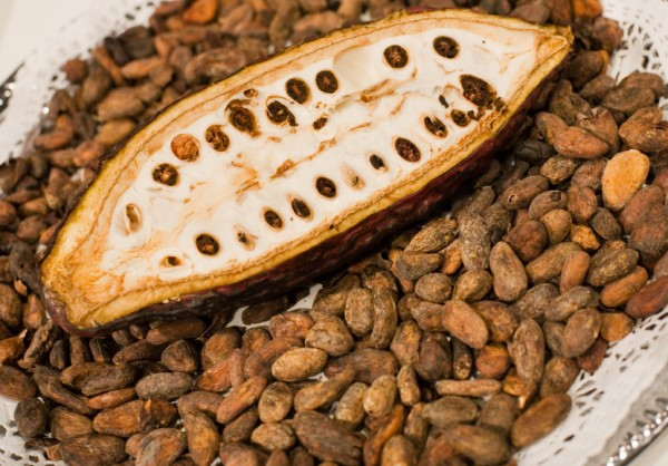 Cacao Pod and Beans. Demand for cocoa is accelerating tropical deforestation