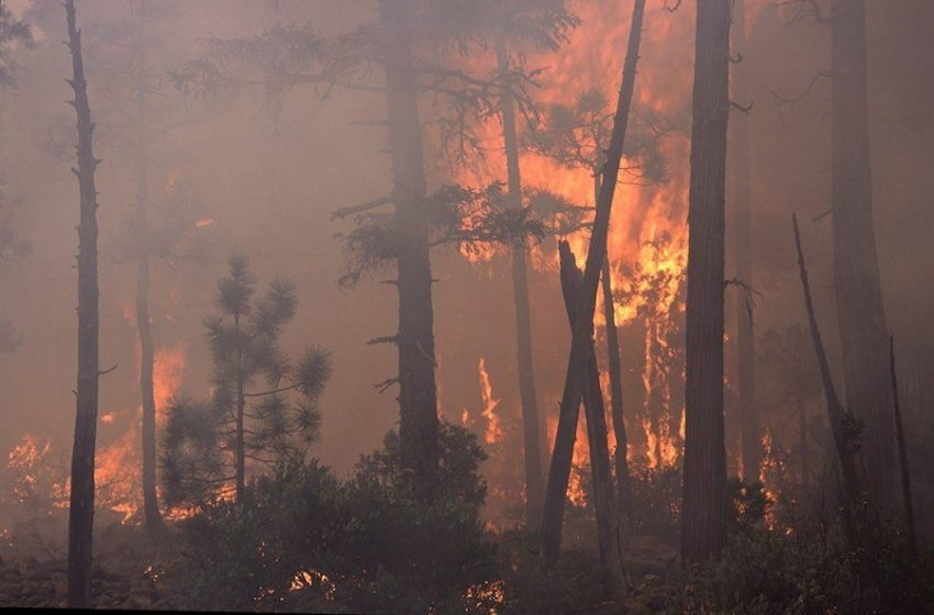 Wildfire, Forests and Climate Change