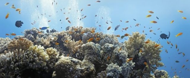 Coral Reefs, climate change, ocean warming and acidification