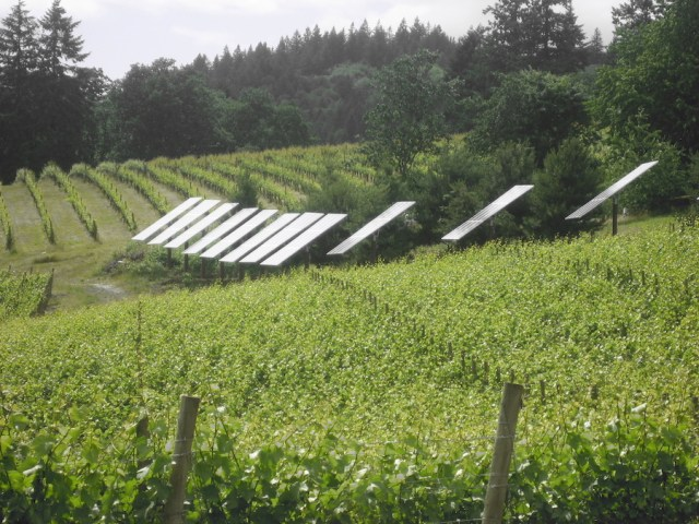 An Oregon vineyard producing renewable energy. One example of sustainable agriculture