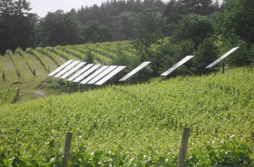 How Modern, Sustainable Agriculture Is Working Toward a Greener Future