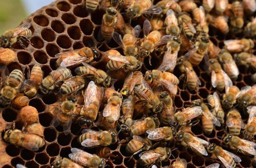 A Study in Contrasts: Honey Bees and Mega Malls in Mexico's Riviera Maya
