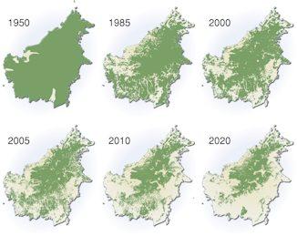 Borneo forest cover decline: 1950-2020