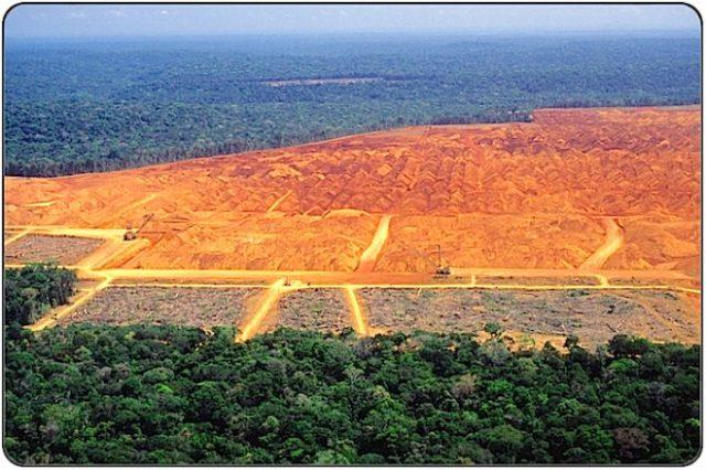 Deforestation: Clearcutting tropical rain forest