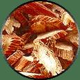 Salvia Root