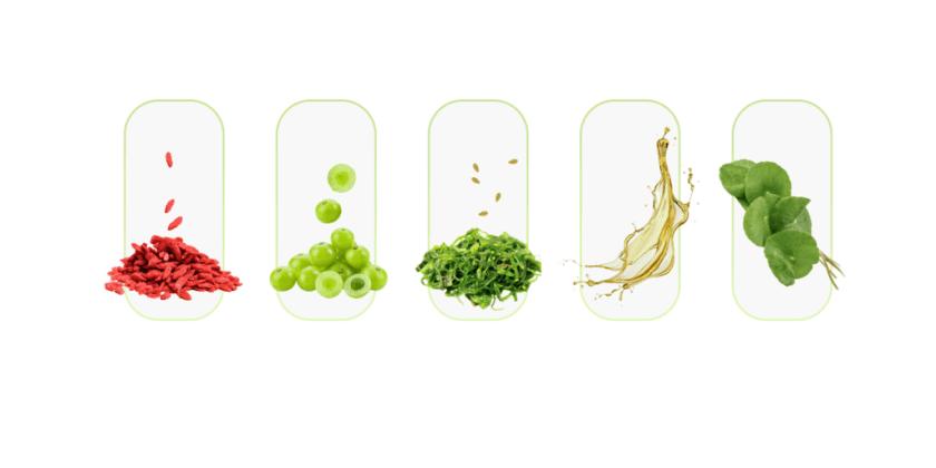 Ingredients Present In Bio Melt Pro