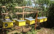 Bee Keeping in Kimende