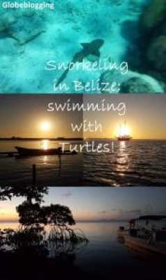 Snorkeling in Belize, swimming with sharks and turtles