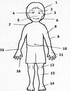 Las partes del cuerpo (glosario)